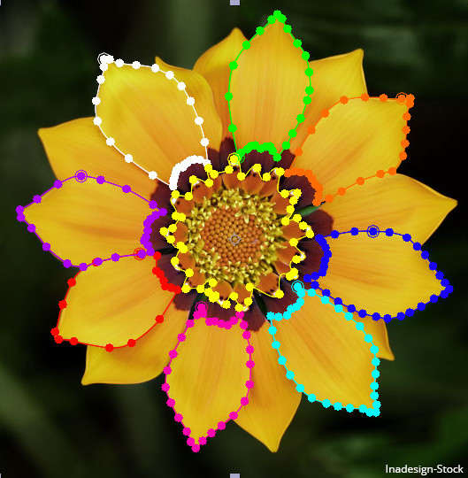 Flower with different colored masks.